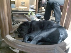 Let sleeping guide dogs lie