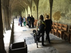 Guide dogs in the Cloisters after the session