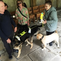 Guide dogs in the Cloisters